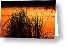 Fire On The Marsh Greeting Card