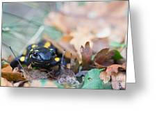 Fire Salamander Dry Leaves Greeting Card