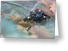 Fire Salamander Front View Greeting Card