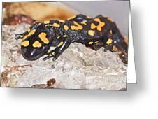 Fire Salamander Salamandra Salamandra Greeting Card