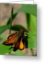 Fire Skipper Greeting Card