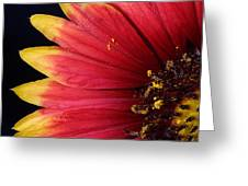 Fire Spokes Greeting Card