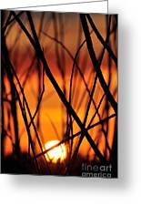 Fire Sunlit Oracle Greeting Card