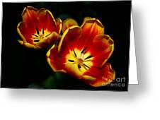 Fire Tulip Flowers Greeting Card
