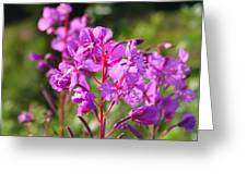 Fire  Weed 3 Greeting Card