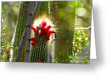 Firecracker Cacti Greeting Card