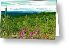 Fireweed And Mountains From Top Of The World Highway-yukon Greeting Card