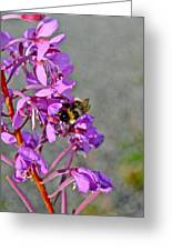 Fireweed Bee Greeting Card