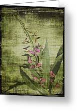 Fireweed - Featured In 'comfortable Art' Group Greeting Card