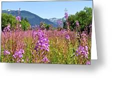 Fireweed Field Greeting Card