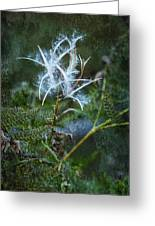 Fireweed Flame Out But Spreading Greeting Card