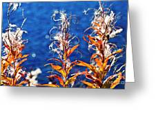 Fireweed Flower Greeting Card by Heiko Koehrer-Wagner