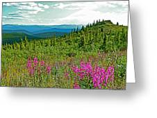 Fireweed Near Top Of The World Highway-alaska Greeting Card