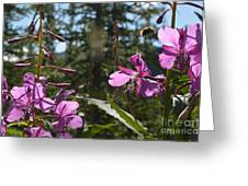 Fireweed Number 10  Greeting Card