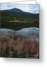Fireweed Number 7 Greeting Card