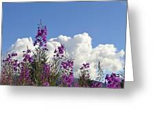 Fireweed Sky Greeting Card