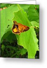 Firey Skipper Butterfly Greeting Card