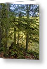 Firs And Ferns Greeting Card