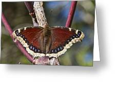 First Butterfly Of Spring Greeting Card