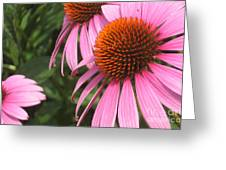 First Cone Flower Greeting Card