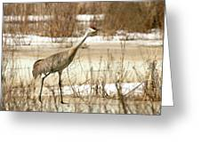 First Crane Greeting Card