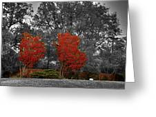 First Fall Color In Red Greeting Card