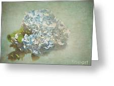 First Hydrangea - Texture Greeting Card