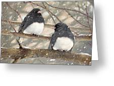 First Snow Dark-eyed Juncos Greeting Card