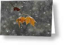 First Snow Greeting Card