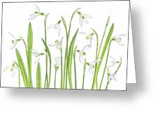 First Snowdrops Greeting Card