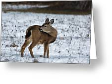 First Winter Greeting Card