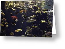 Fish Aquarium Greeting Card