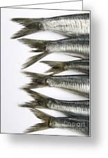 Fish Greeting Card by Bernard Jaubert