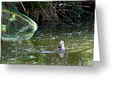 Fish Caught On A Line In Water Greeting Card