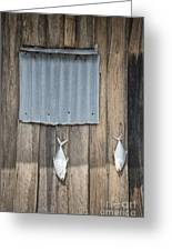 Fish Drying Outside Fisherman House Greeting Card
