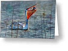 Fish In Greeting Card