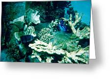 Fish In The Coral Greeting Card