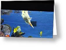 Fish - National Aquarium In Baltimore Md - 1212117 Greeting Card
