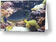 Fish - National Aquarium In Baltimore Md - 1212121 Greeting Card