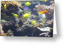 Fish - National Aquarium In Baltimore Md - 121246 Greeting Card by DC Photographer