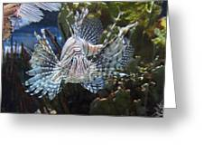 Fish - National Aquarium In Baltimore Md - 121266 Greeting Card by DC Photographer