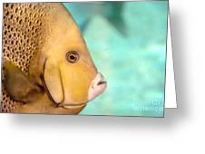 Fish Profile Greeting Card