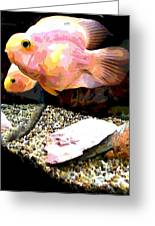 Fish Greeting Card by Sarah E Kohara