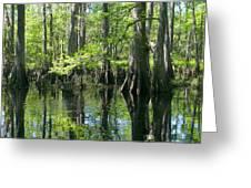 Fisheating Creek Greeting Card