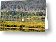 Fishing At George Town Lake Greeting Card