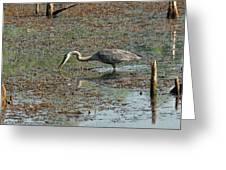 Fishing Blue Heron Greeting Card