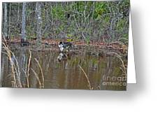 Fishing Feline Greeting Card by Al Powell Photography USA