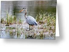 Fishing Heron  Greeting Card
