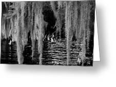 Fishing Hole Greeting Card by David Mcchesney