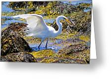 Fishing The Tide Greeting Card